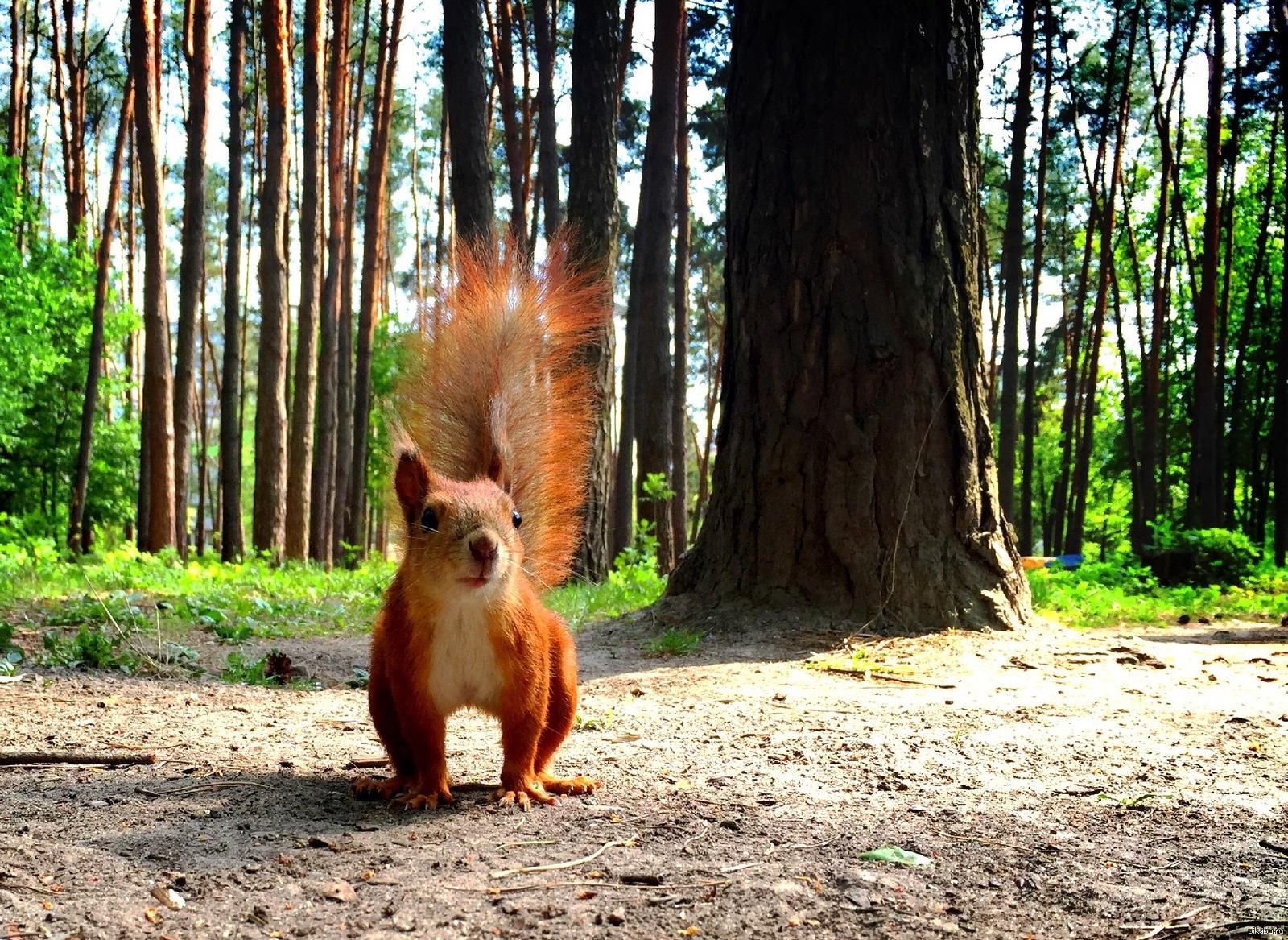 разные приколы в лесу фото ретуши