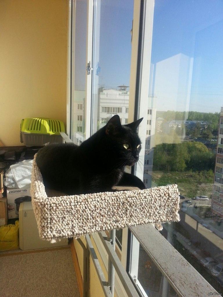 Как сделать для кошки на балконе.