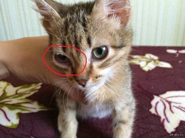 Как закладывать коту тетрациклиновую мазь