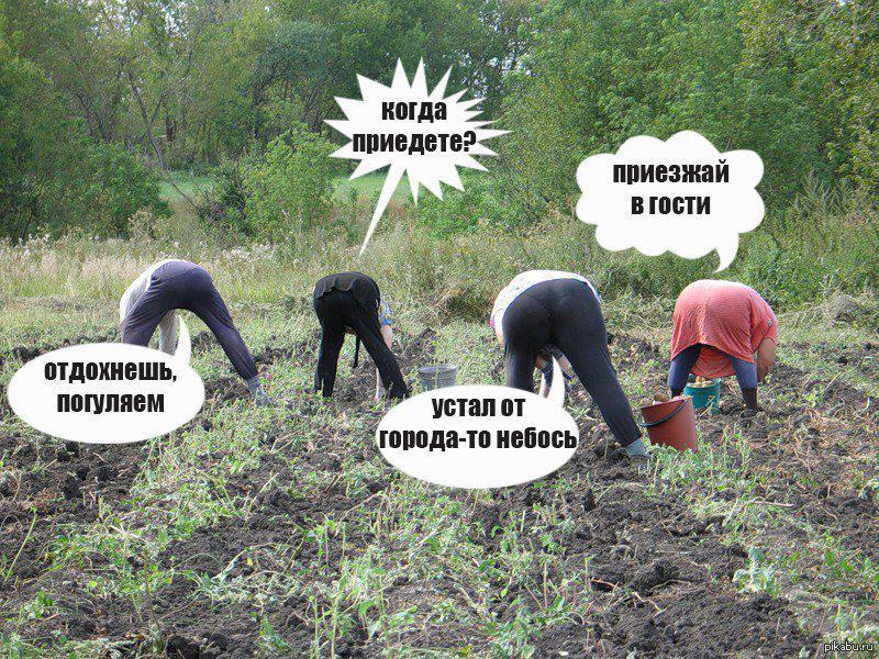 Демотиваторы копать картошку