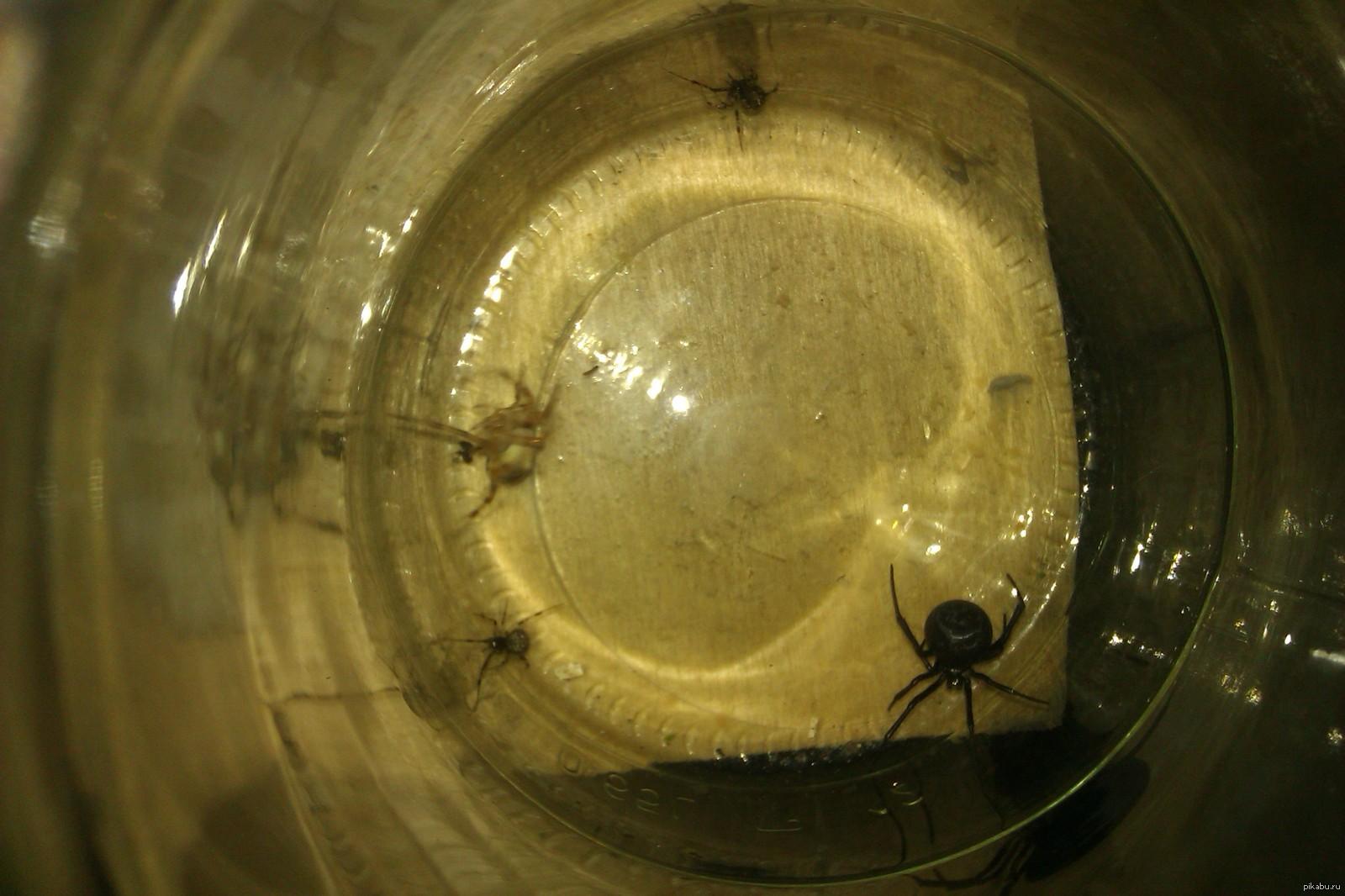описание паук фото и описание