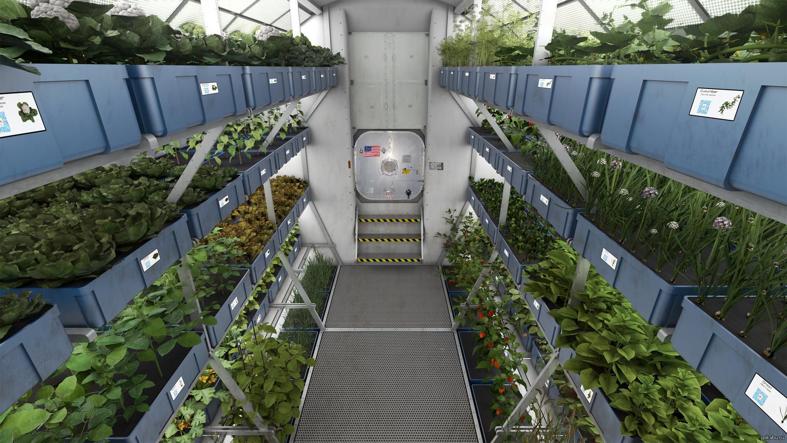 Картинки по запросу выращивание растений на орбите