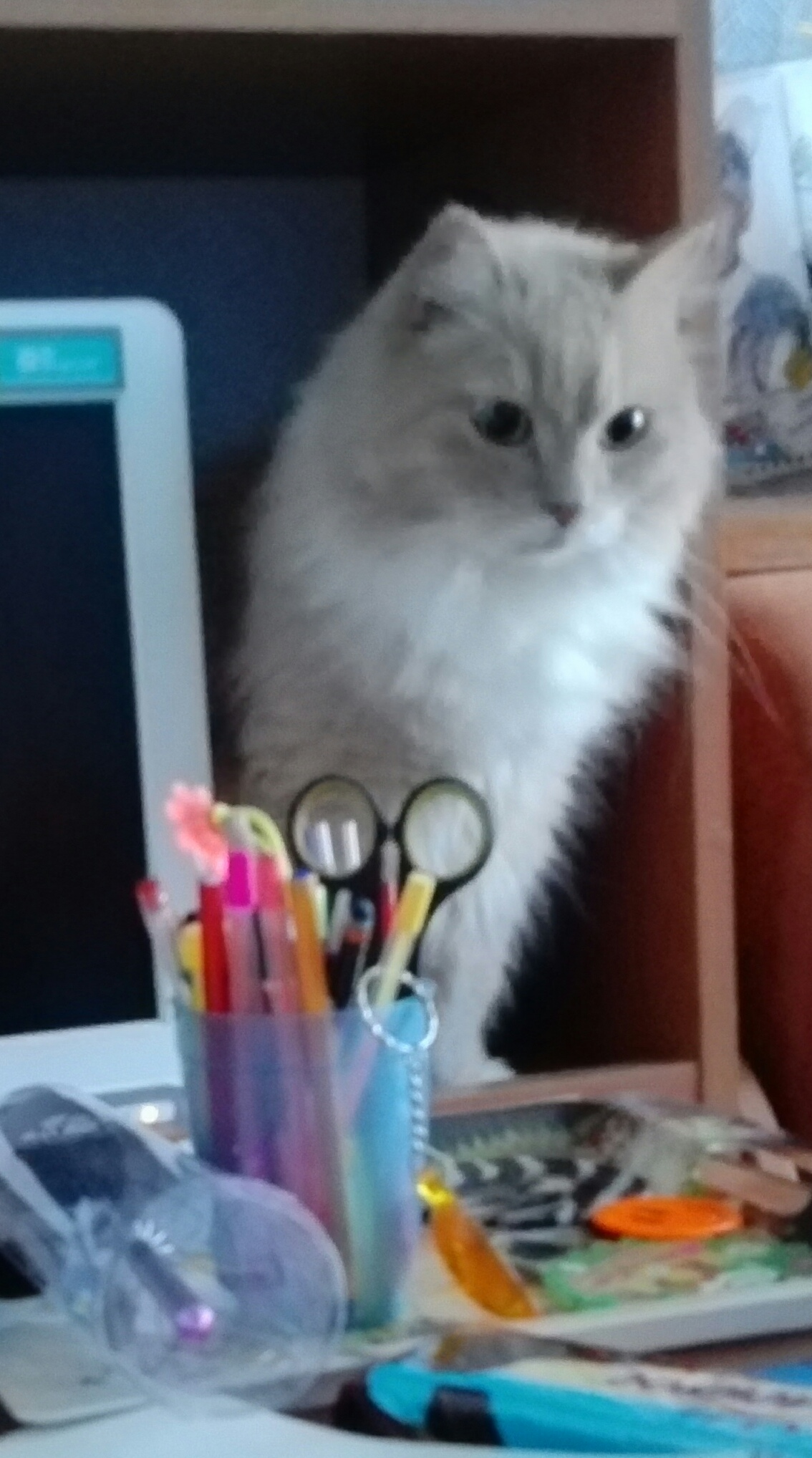 котенок и коробка с газетами