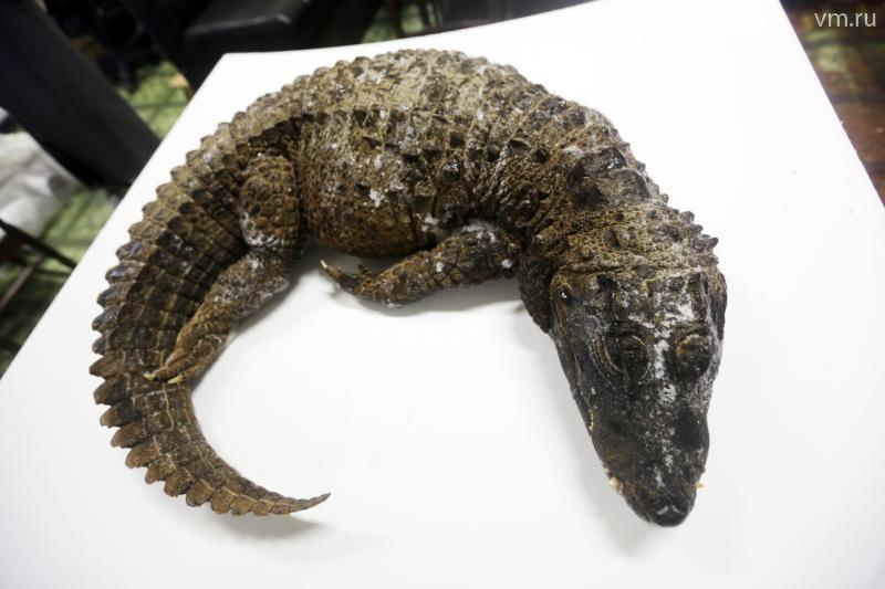 Последствия крокодила фото — img 4