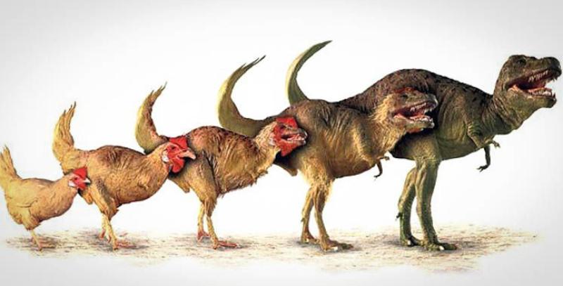 У динозавров есть член