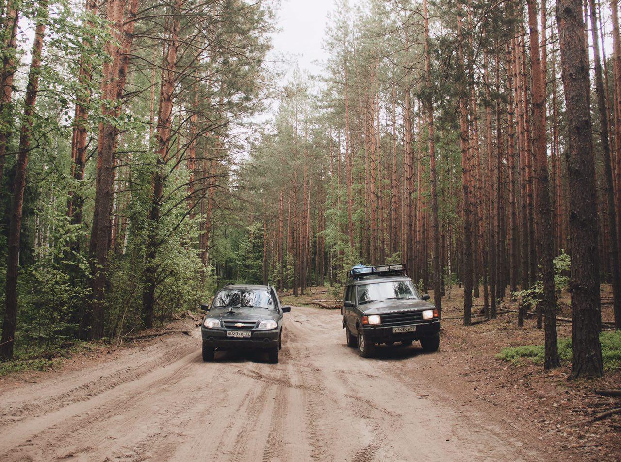 Вывезли в лес толпой