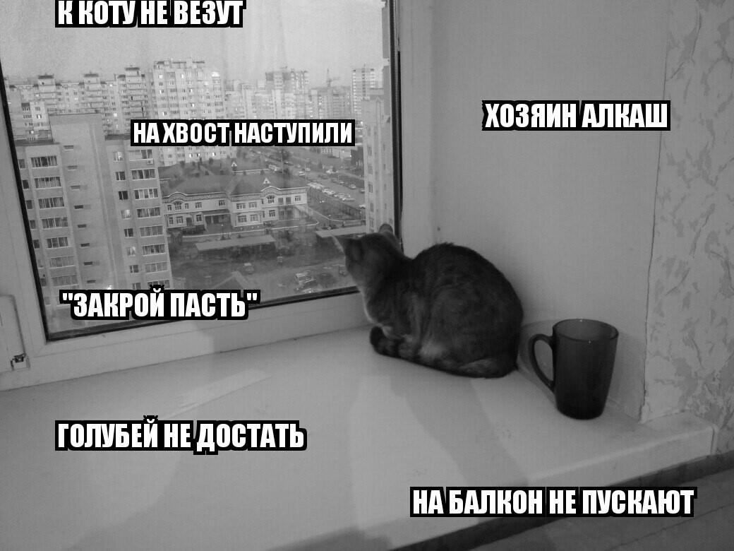 Текст кот и киса