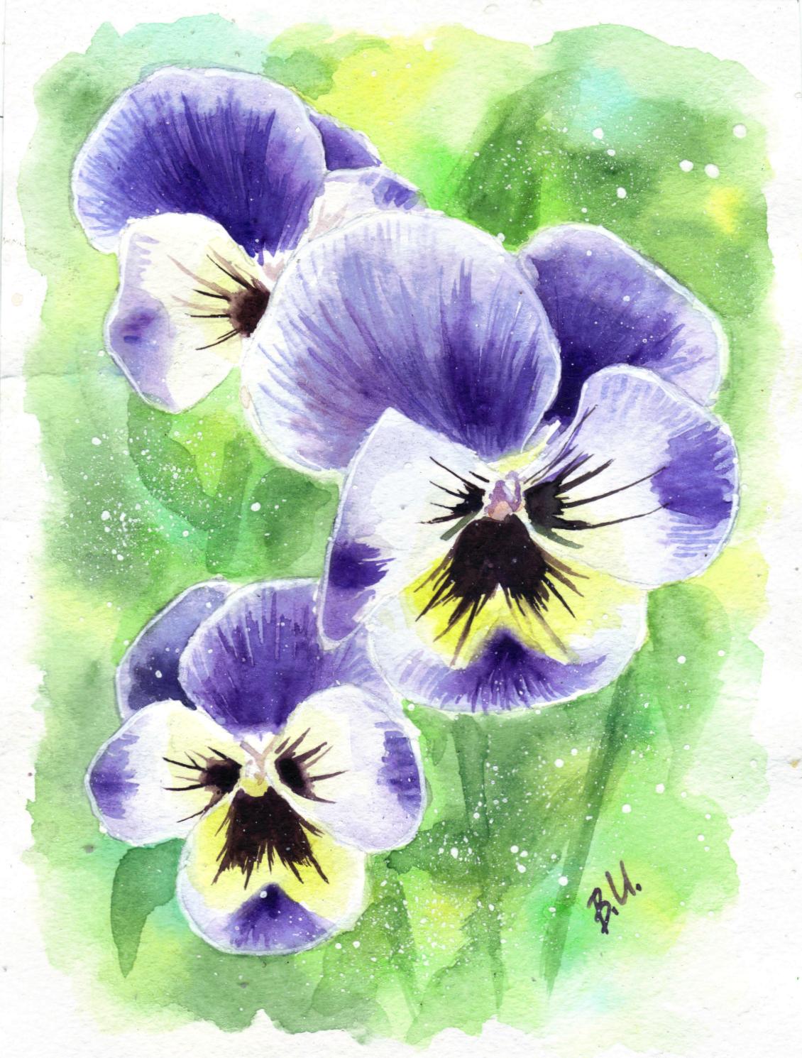 цветы фото рисунки