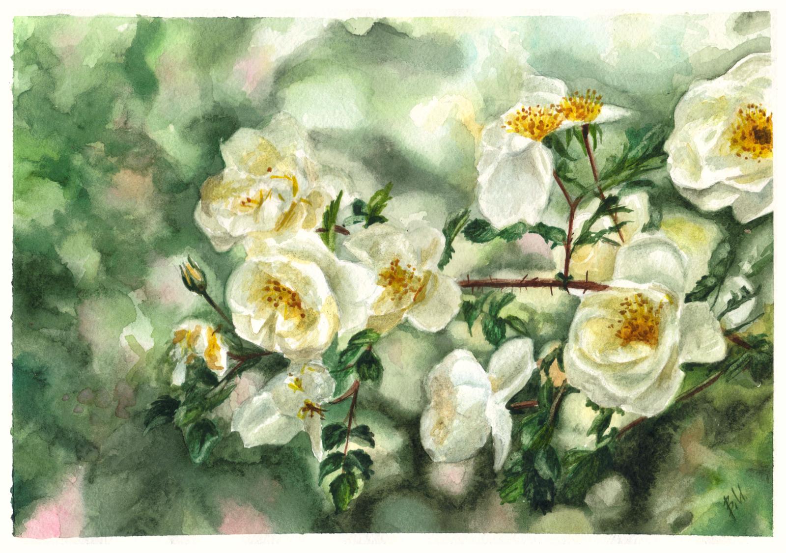 фото рисунки цветы