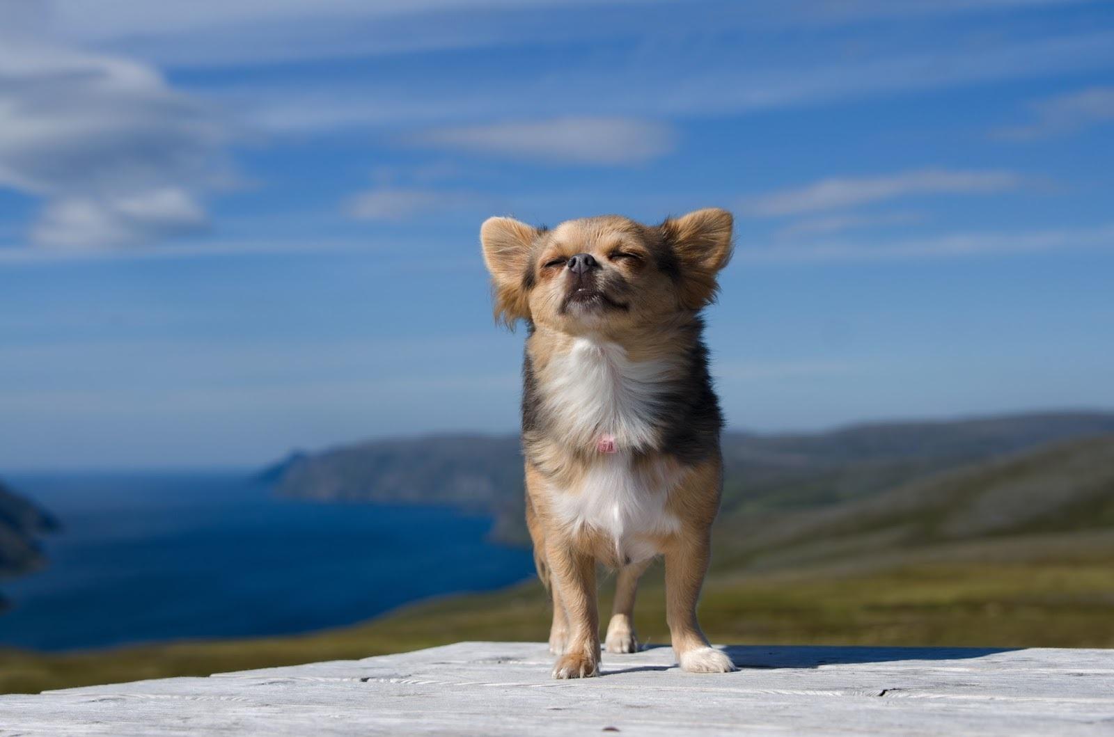 Смотреть Маленькие породы собак – удивительные милые создания видео